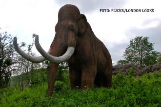 Vladimir Putin se gandeste la clonarea mamutilor. Promisiunea pe care i-au facut-o cercetatorii rusi