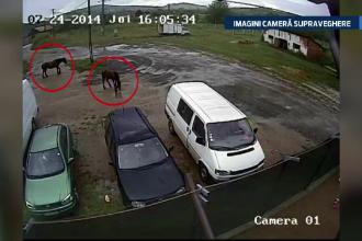 IMAGINI camera de supraveghere. Un sofer si fetita lui, la un pas de moarte din cauza unor cai uitati in mijlocul drumului