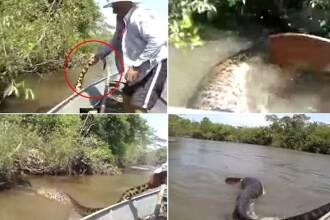 Trei pescari brazilieni risca inchisoare pentru ca au agresat si incercat sa prinda o anaconda galbena. VIDEO
