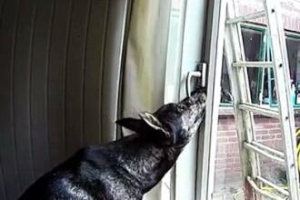 Au montat o camera in living sa vada ce face cainele lor. Imaginile au ajuns virale pe internet. VIDEO