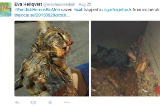 Pisica salvata dintr-o masina cu gunoi chiar inainte de incinerare. Eforturile depuse pentru mica felina si cum se simte acum