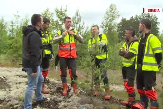 Viata vasluienilor care isi castiga existenta la taiat lemne in zonele izolate din Scandinavia. Ce salariu lunar primesc