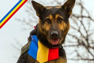 Max, cainele erou al Armatei Romane, a fost inmormantat cu onoruri militare.