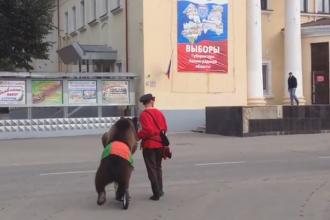 Un barbat a venit cu ursul la sectia de votare, in cadrul alegerilor locale din Rusia. Reactia membrilor comisiei. VIDEO