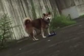 Cum reactioneaza cainii cand stapanii lor simuleaza un lesin pe strada. Experimentul care i-a dezamagit pe oameni