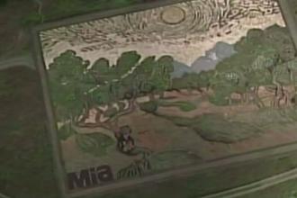 Lan de cereale, transformat intr-o opera de arta. Un artist a recreat un tablou al lui Van Gogh din pietre si plante