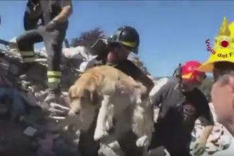 Un caine a supravietuit in conditii greu de imaginat timp de noua zile dupa cutremurul din Italia. Cum a fost salvat. VIDEO
