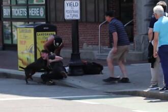 Atacul infiorator al unui pitbull asupra unui beagle. Stapana cainelui agresat, ranita in timp ce incerca sa-i desparta