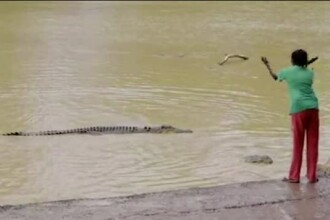 A crezut ca e o idee buna sa arunce cu o piatra intr-un crocodil de patru metri. Continuarea a fost filmata. VIDEO
