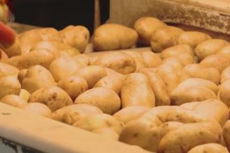 Super productie de cartofi in acesta toamna. Cu cat se vinde la piata un kilogram