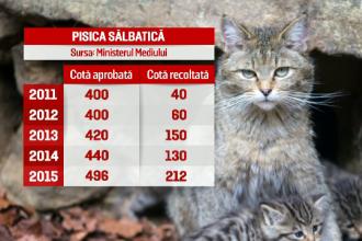 Liber la ucis animale din partea Min. Mediului. Petitie pentru a stopa omorarea a 1.600 de pisici salbatice, ursi si lupi