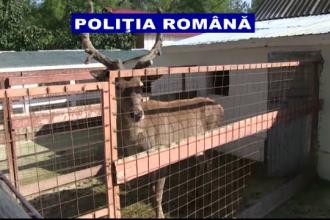 Gradina zoologica din curtea unui galatean. Cate specii de animale detinute ilegal au gasit politistii