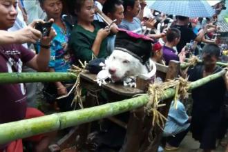 Ritual ciudat în China, cu mii de turiști. Cum este plimbat un câine de către localnici