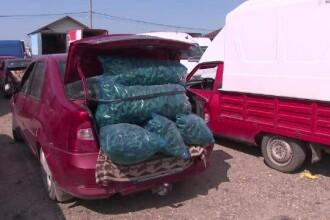 Recolta de castraveţi este aşa de mare, încât şi bulgarii cumpără din România
