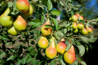 Invenţia românească care elimină chimicalele din fructe şi legume