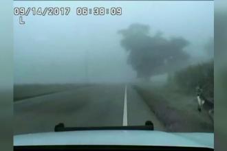Cangur evadat de la o fermă din Wisconsin, prins pe autostradă. Ce reacţie a avut când a văzut poliţia