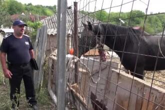 Un băcăuan şi-a torturat calul sub ochii vecinilor. Poliţia nu îi poate confisca animalul