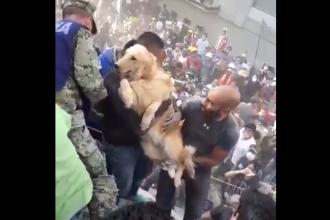 Moment viral după cutremurul din Mexic. Reacția oamenilor când un Golden Retriever este salvat. VIDEO