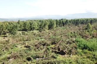 Peste 700 de hectare de pădure, distruse complet de furtunile din ultimele zile. VIDEO din dronă