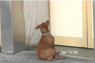 O cățelușă și-a așteptat stăpânul ore întregi la ușa unui spital din Iași. VIDEO