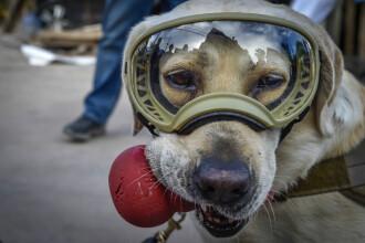 Frida, labradorul care a devenit simbol al speranței după cutremurul din Mexic