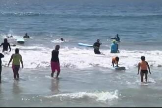 Concurs de surf pentru câini, în California