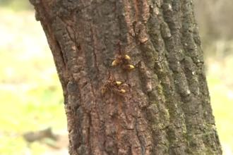 Insecte ucigaşe într-o localitate din Dolj. Doi oameni au murit după ce au fost înțepați