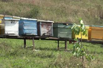 A venit din Anglia şi a murit a doua zi, înţepat de albine.