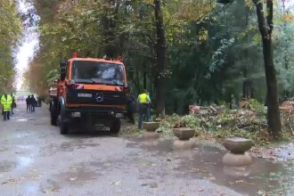 Furtună în Târgu Jiu. Trei copaci au căzut chiar lângă operele lui Brâncuşi