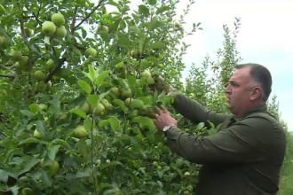 Producătorii de mere din Dâmbovița s-au unit. Recolta va ajunge în 2 lanțuri de magazine