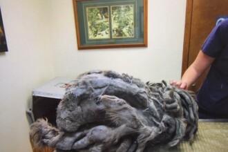 Monstru lăsat în faţa unui adăpost de animale. Ce era de fapt creatura