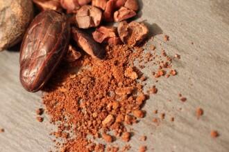 Transformările climatice ne lasă fără ciocolată. Planta de cacao, salvată în laborator