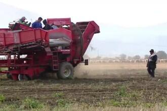 Credite mai ieftine pentru tinerii care vor să devină fermieri. În ce condiții pot face împrumuturi