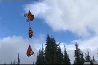 Sute de capre de munte, mutate cu elicopterul după ce au invadat un parc național