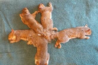 5 pui de veveriţă cu cozile înnodate, salvaţi de veterinari