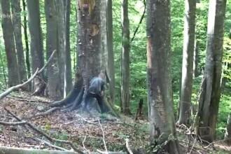 Bărbat din Suceava, mort într-un accident sinistru, în timp ce tăia un copac cu drujba