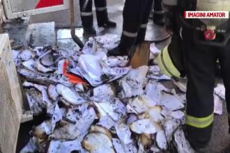 Incendiu la o agenţie de pariuri din Ploieşti. O angajată a făcut atac de panică