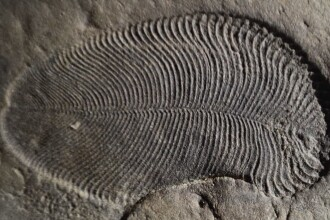Cum arăta cel mai vechi animal de pe Terra