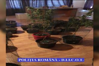 Ce au descoperit polițiștii în casa unor traficanți de droguri, în Timișoara