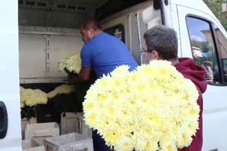 """Producătorii români de flori se plâng că statul nu-i ajută. """"Florile străinilor rezistă mai mult"""""""