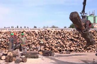 """Prețul lemnului """"a luat foc"""" în unele zone. Cât se cere pe un metru cub, în prag de iarnă"""