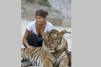 Motivul pentru care peste 80 de tigri salvaţi dintr-un templu budist au murit