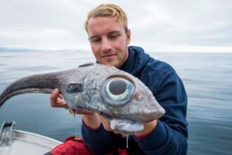 """O creatură marină neobișnuită, """"ca un dinozaur"""", a fost prinsă în apele din Norvegia"""