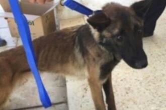 În ce stare au ajuns câinii militari trimiși de SUA în Iordania. Imagini tulburătoare
