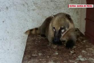 Condițiile în care erau ținute animalele sălbatice de pe domeniul lui Nuțu Cămătaru