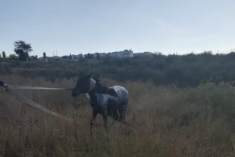 Cal salvat de pompieri la Galați. Căzuse într-un bazin de decantare a gudronului