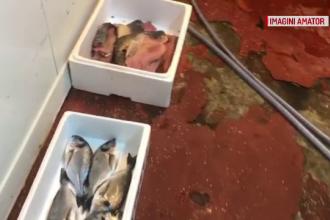 Carne depozitată printre gândaci și excremente de șobolani în vechea hală din Piața Obor