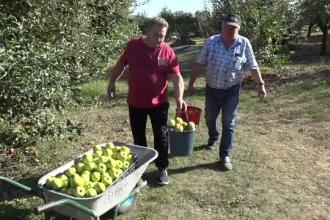 Vremea capricioasă a înjumătățit producția de mere. Cum sunt acoperite pierderile