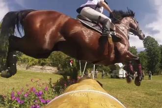 Cum a ajuns un cal din Ecuador în România. Valorează 340.000 de euro