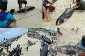 Imagini dezolante pe o plajă din Africa. Peste 160 de delfini au fost găsiți morți